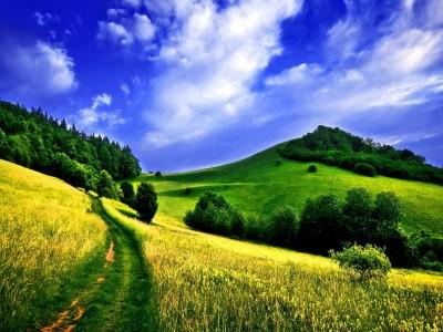 188525__path-through-the-meadow_p