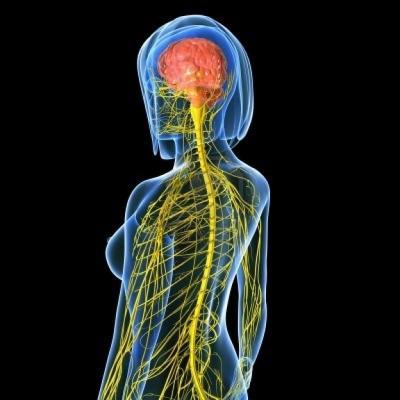 El-sistema-nervioso-central-esta-formado-por-el-cerebro-y-la-medula-espinal.jpg