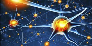 Neuroplasticidad y estilo de vida