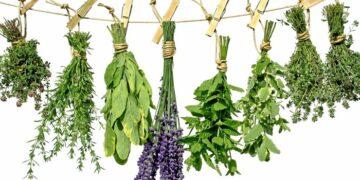 El poder sanador de las plantas